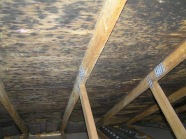 Mold in the Attic