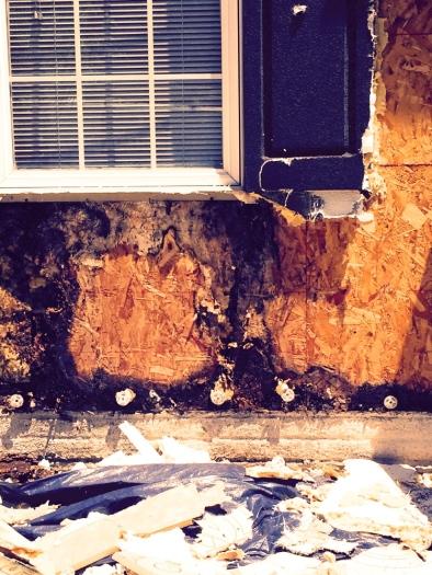 water rot pattern behind a window leak