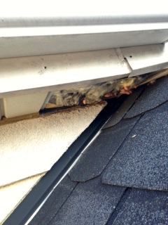Rodents had pulled out the soffit and were throwing insulation over the roof