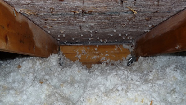 Frozen attic condensation can cause a frost like appearance on the inside of your attic