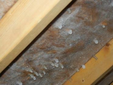 attic-rain