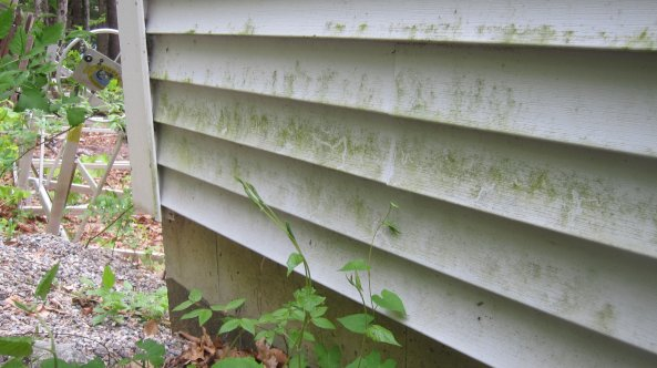Fungus or algae growth on vinyl siding